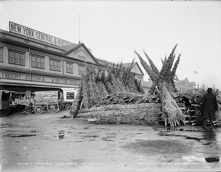Christmas Tree Market, New York City, c. 1903