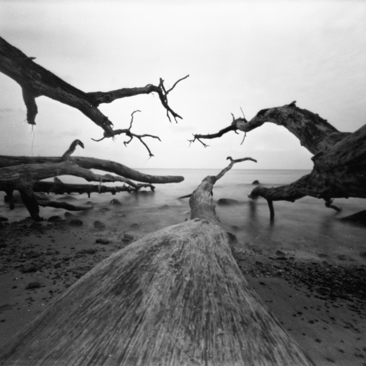 Photo made with driftwood pinhole camera
