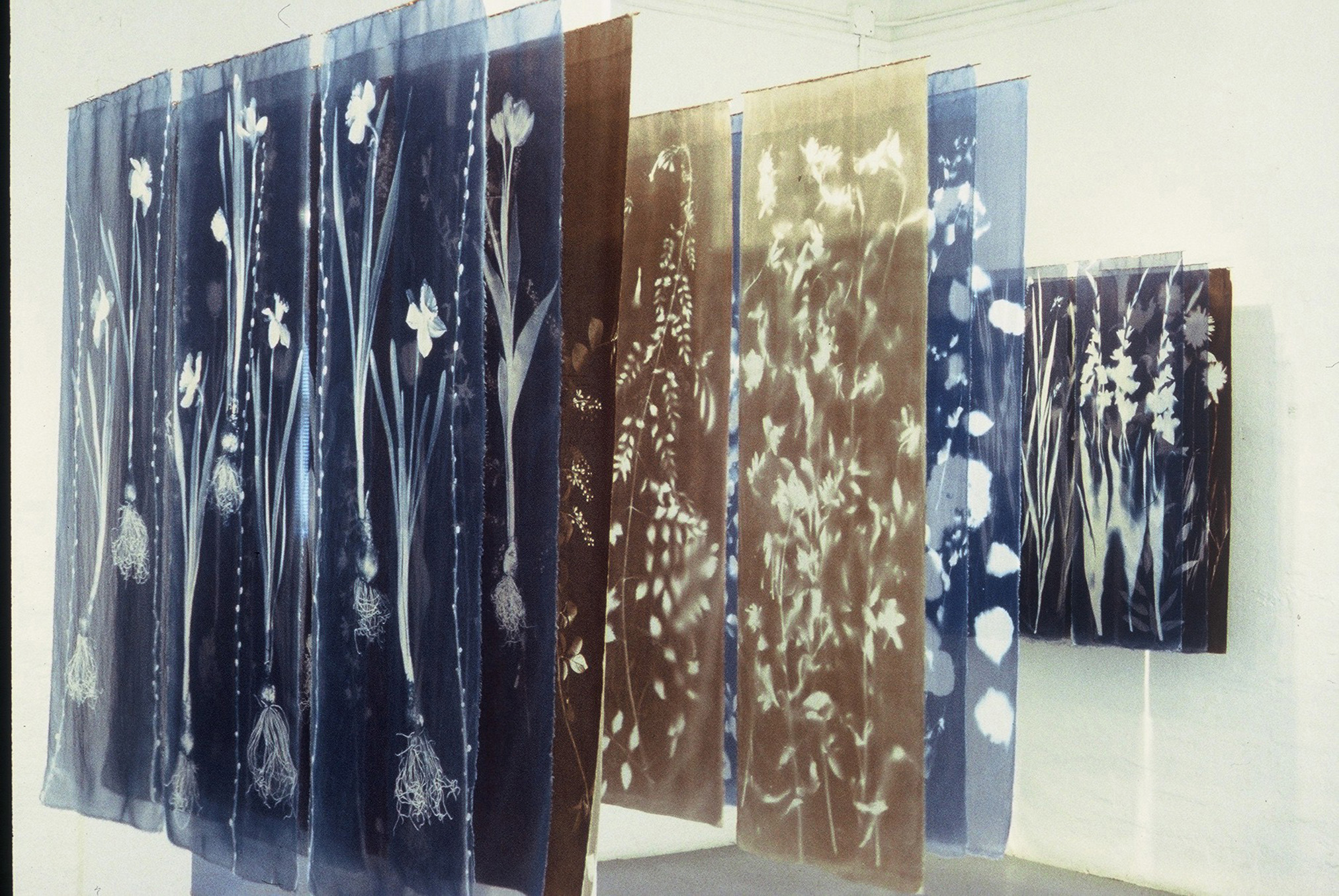 Shadow Gardens  (installed 2004 at Visual Arts Centre of Clarington), cyanotype and van dyke on silk organza. Courtesy of the artist Sally Ayre.