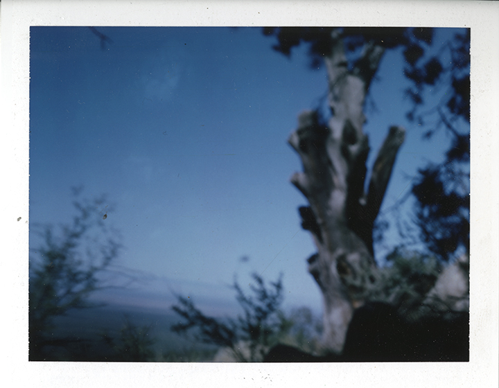 4x5 Color Film (Ektar 100) Photo: Adam Donnelly and David Janesko