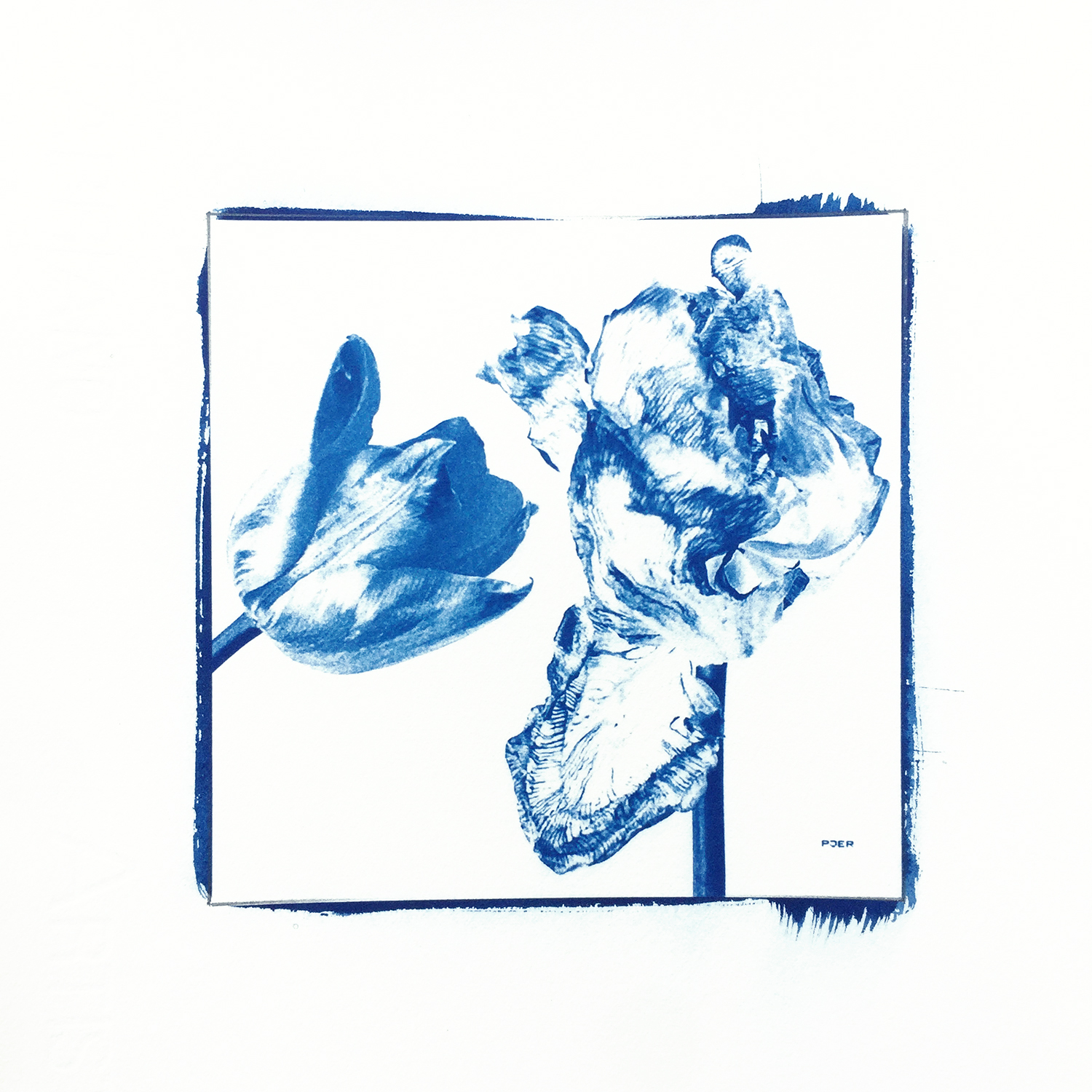 Photo by @pjer1 (cyanotype)