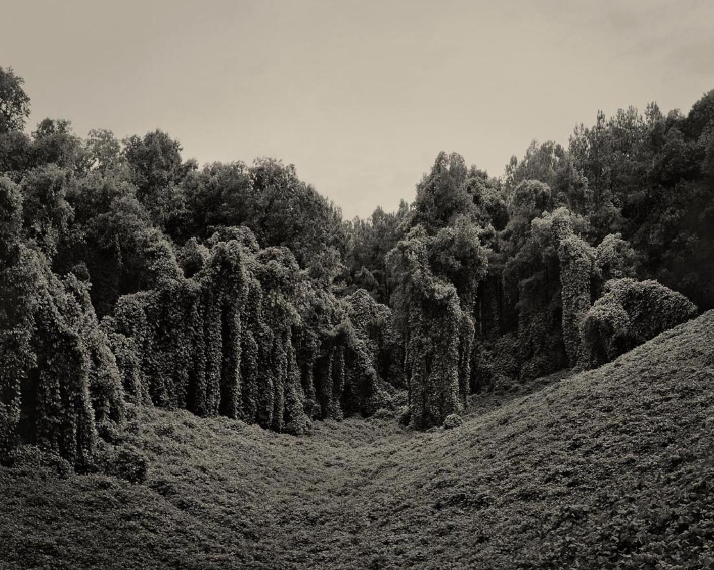 Kudzu Project: Alabama Fields