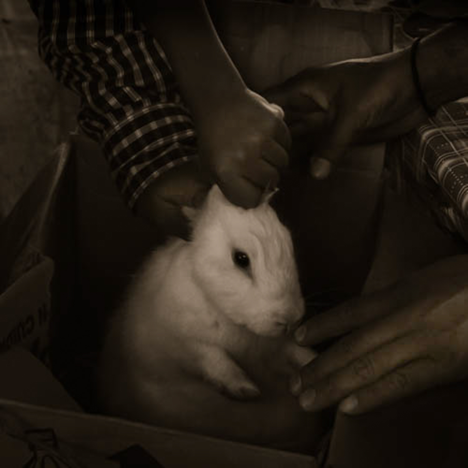 Bunny at the Market  from the series  At the Hands of Man ,  Sharon Harkness
