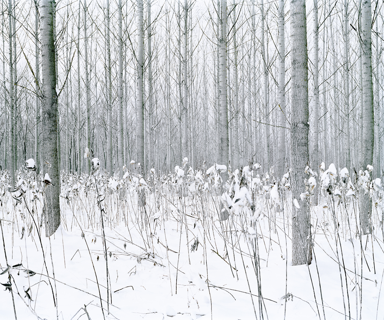 Frozen Flowers, Csevharaszt, Hungary, 2012