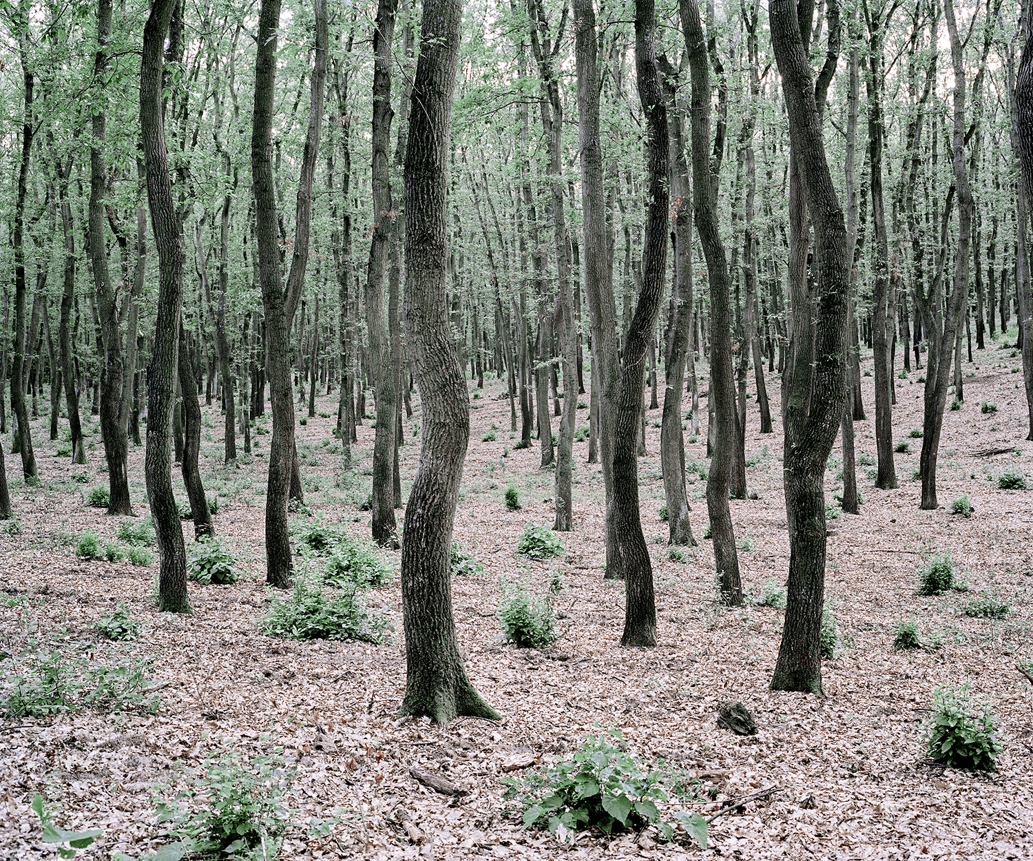 Green Bushes  from the series  Green Silence   Dániel Kovalovszky  Archival pigment print 7.5 x 9, Edition of 5, signed and numbered $120