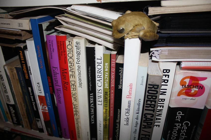 A curious amphibian visits Fabricio Schmidt's Brazilian bookcase.