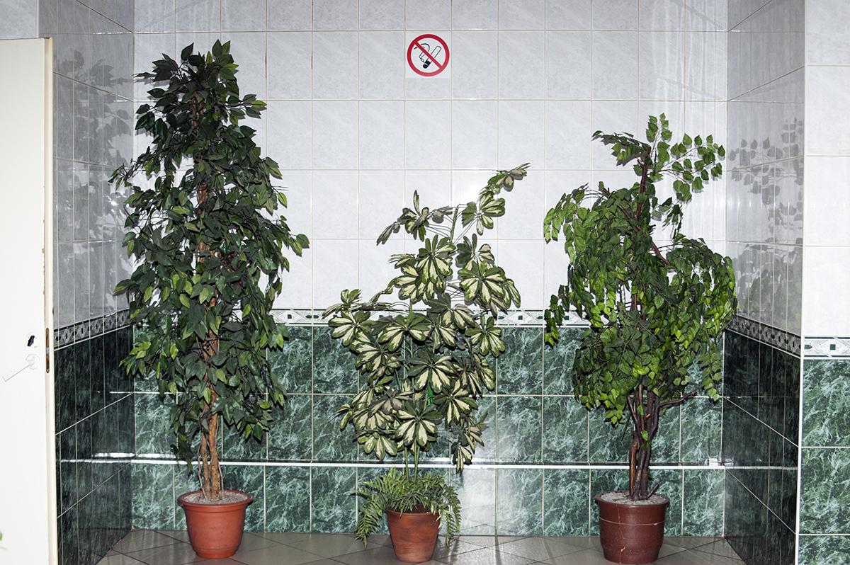No Smoking Behind Plants Please