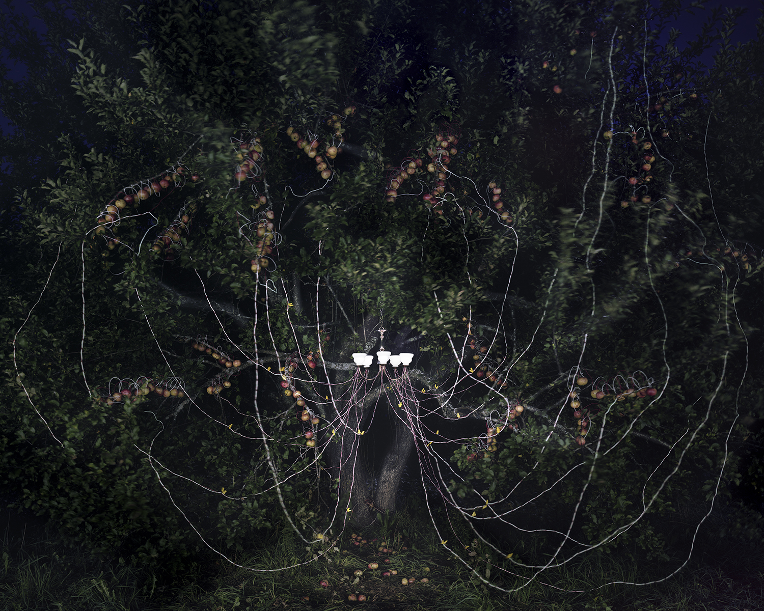 Apple Trees and LEDs, 2011