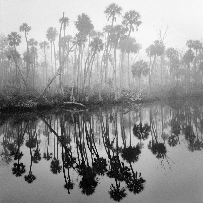 Creek in Fog