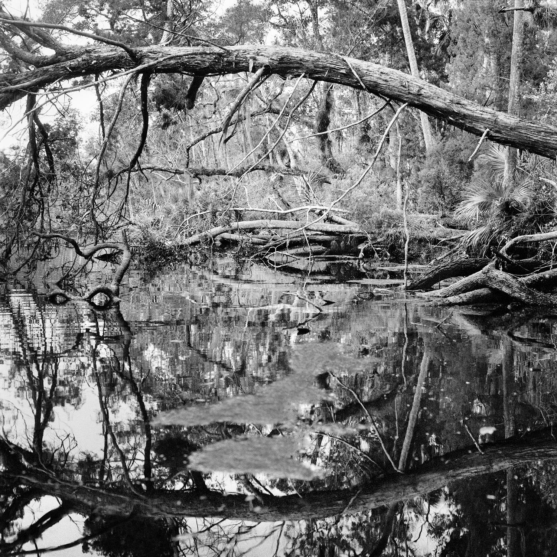 Upper Crawford Creek Shoreline