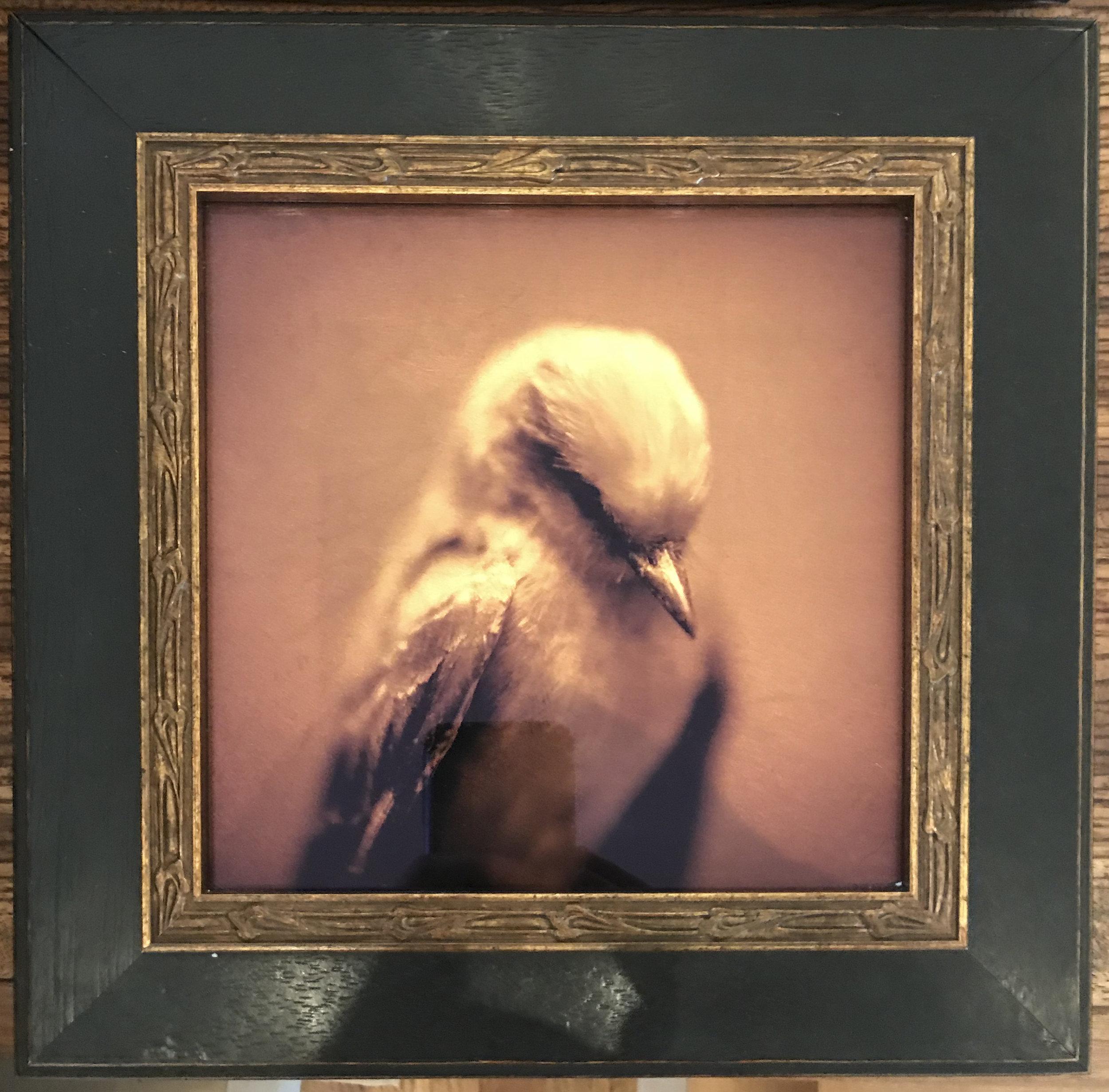Kate Breakey at Stephen L. Clark Gallery