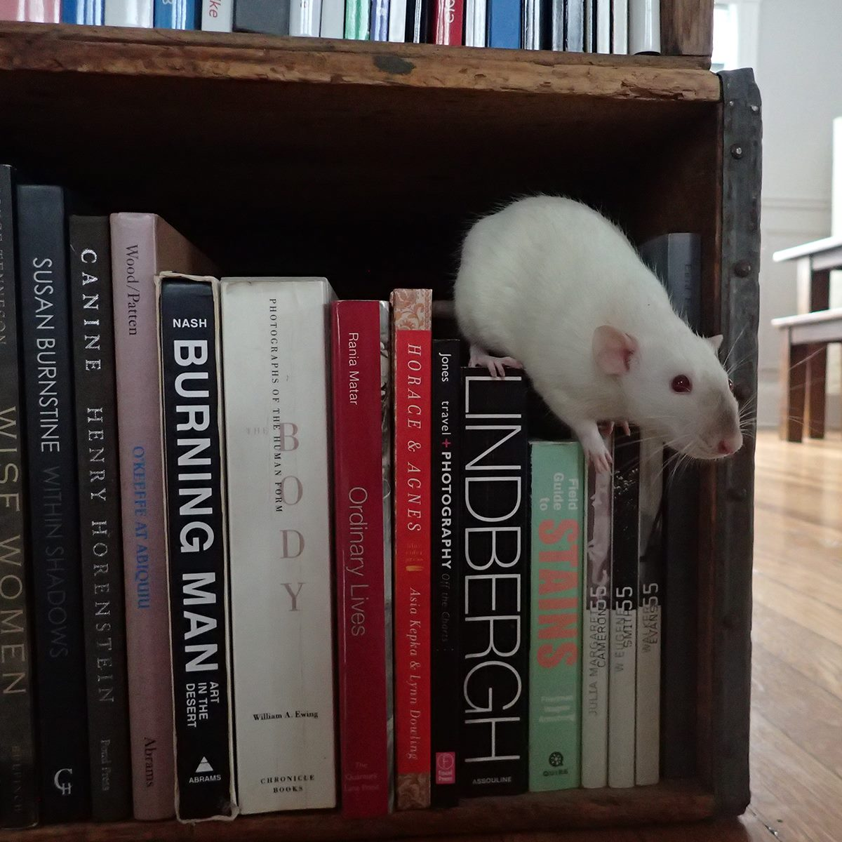 Silke Hase 's pet rats sniffs out the good titles in her photobook library.