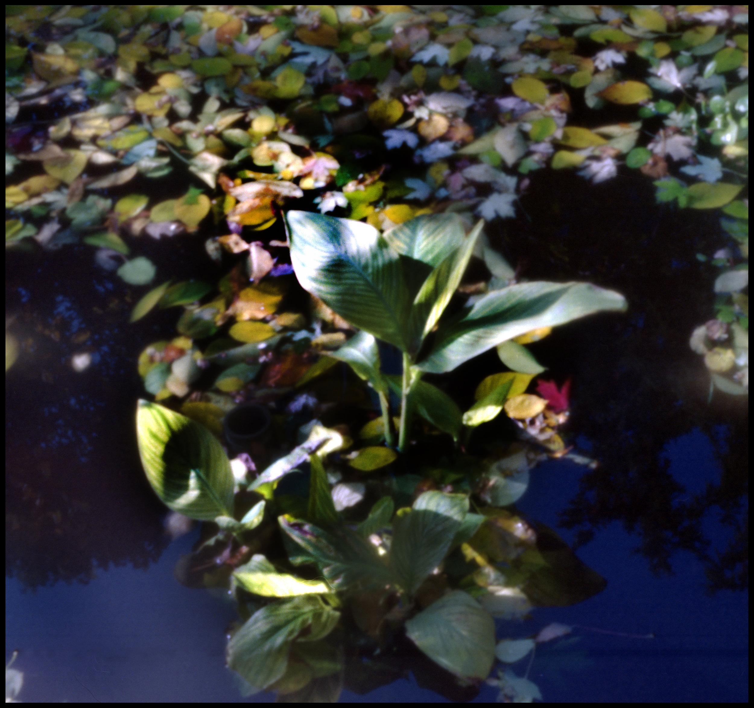 Photo made with the pinhole camera.