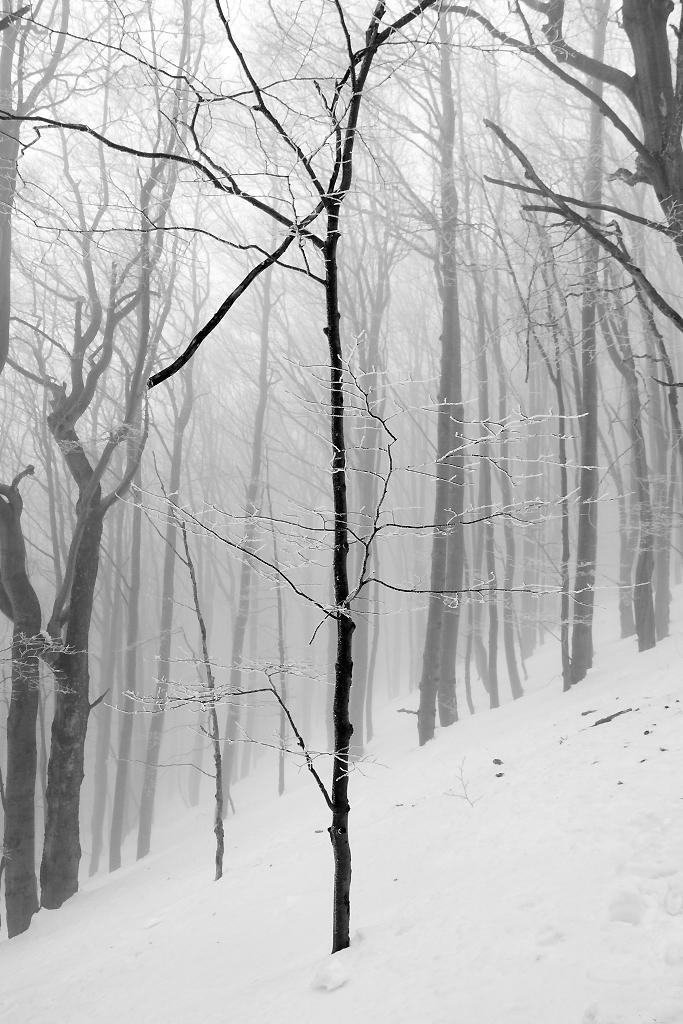 Bieszczady in Winter 2