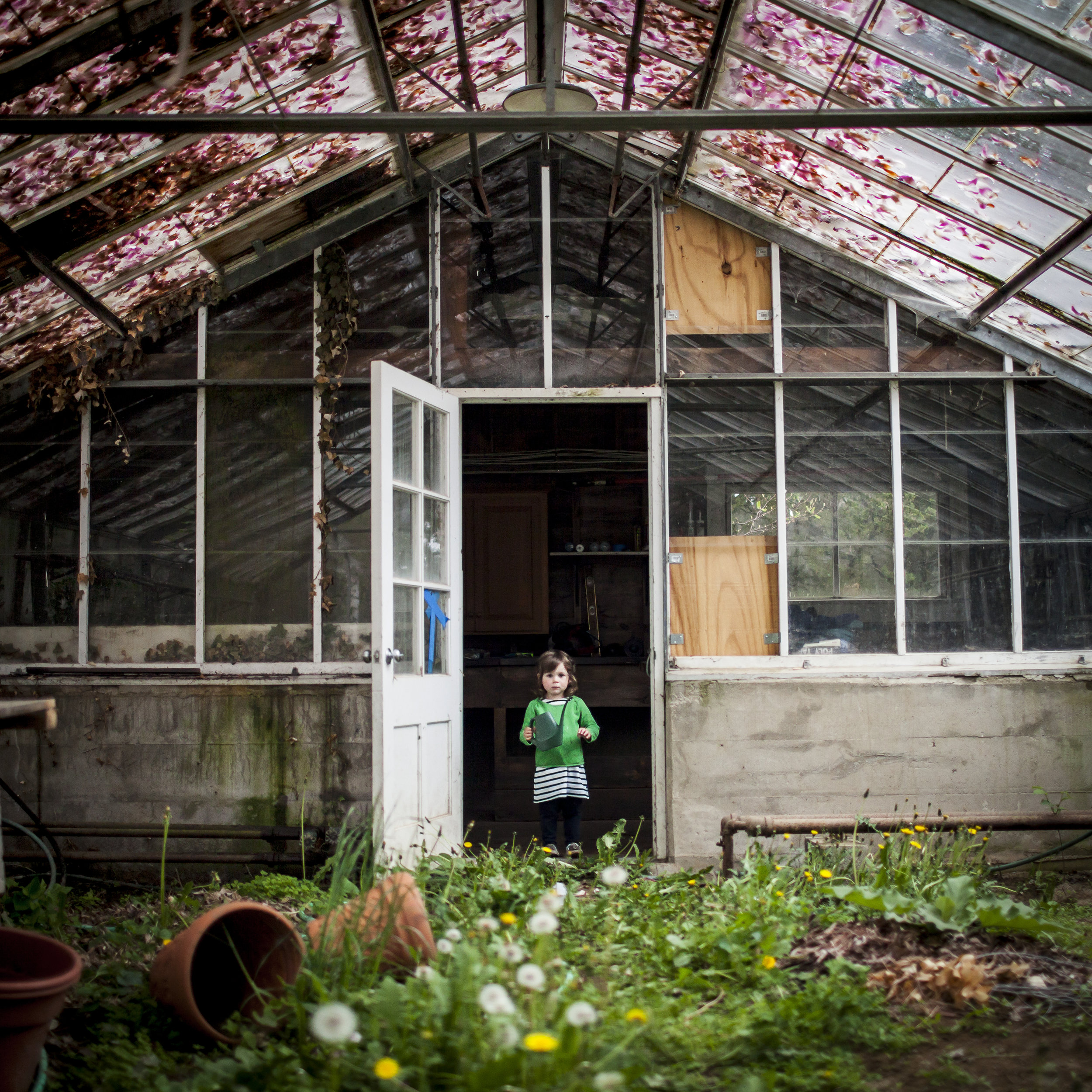 Scout and the Greenhouse ,  Cig Harvey