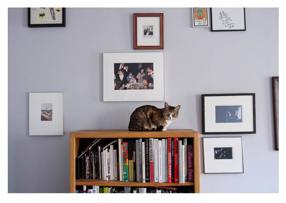 Tim Soter 's photobook library makes for a good cat perch.