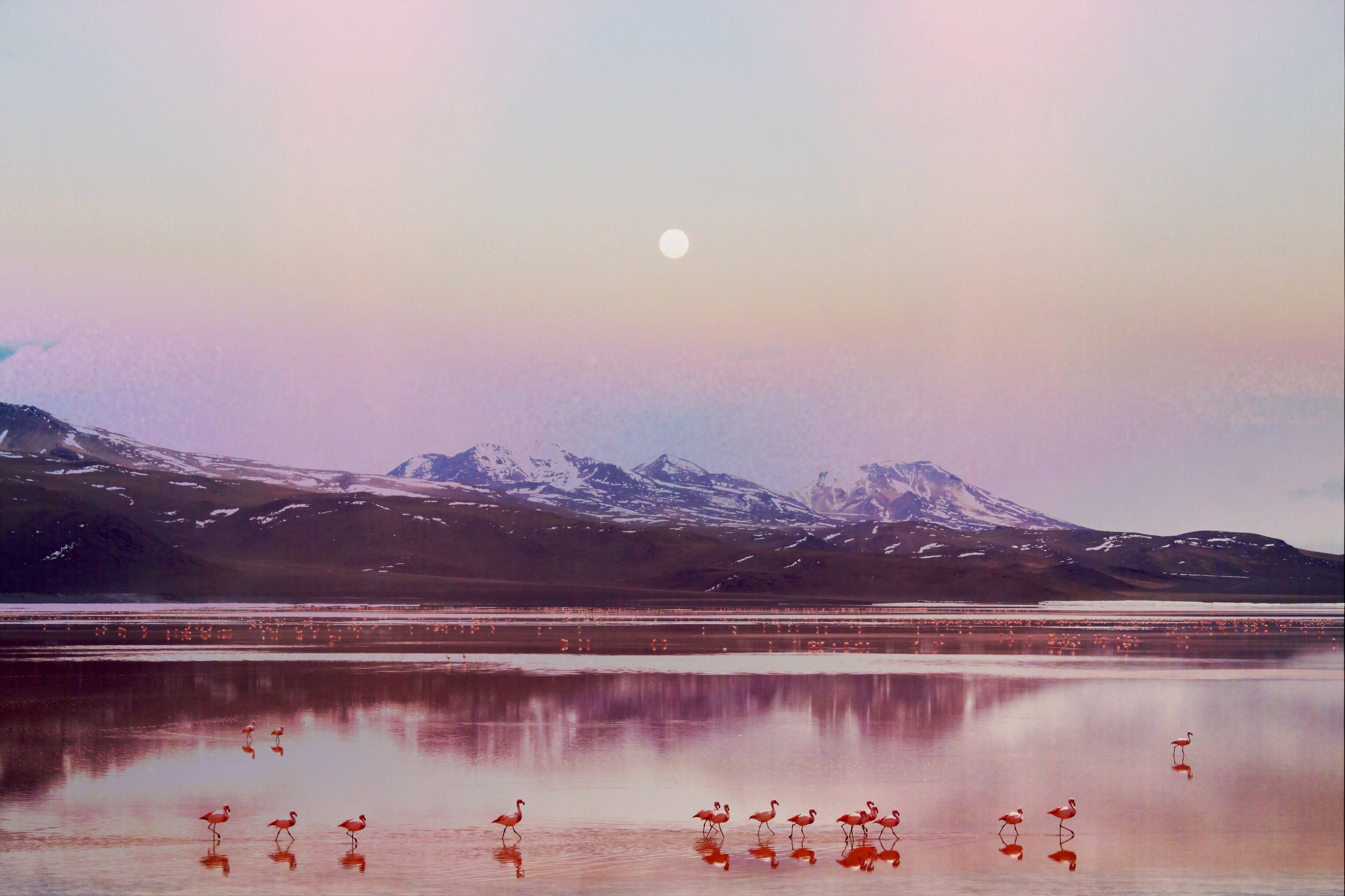Eternal Moonshine ,  Navina Khatib
