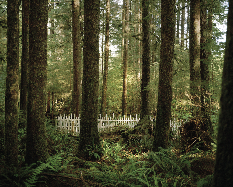 Pioneer Graveyard, 2014  from the series  Doug's Cabin ,  Karianne Bueno