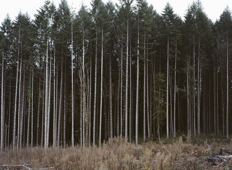 Untitled Oregon Landscape #33 ,  Alyson Bowen