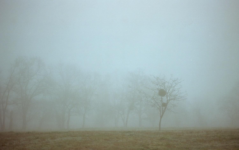 In the Mist ,  G. Encrenaz