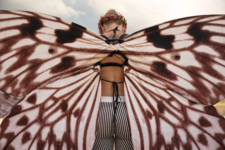 Butterfly ,  Al Thompson