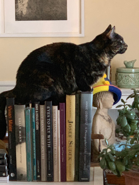 Jeanne Wells ' photobook library as a cat perch.