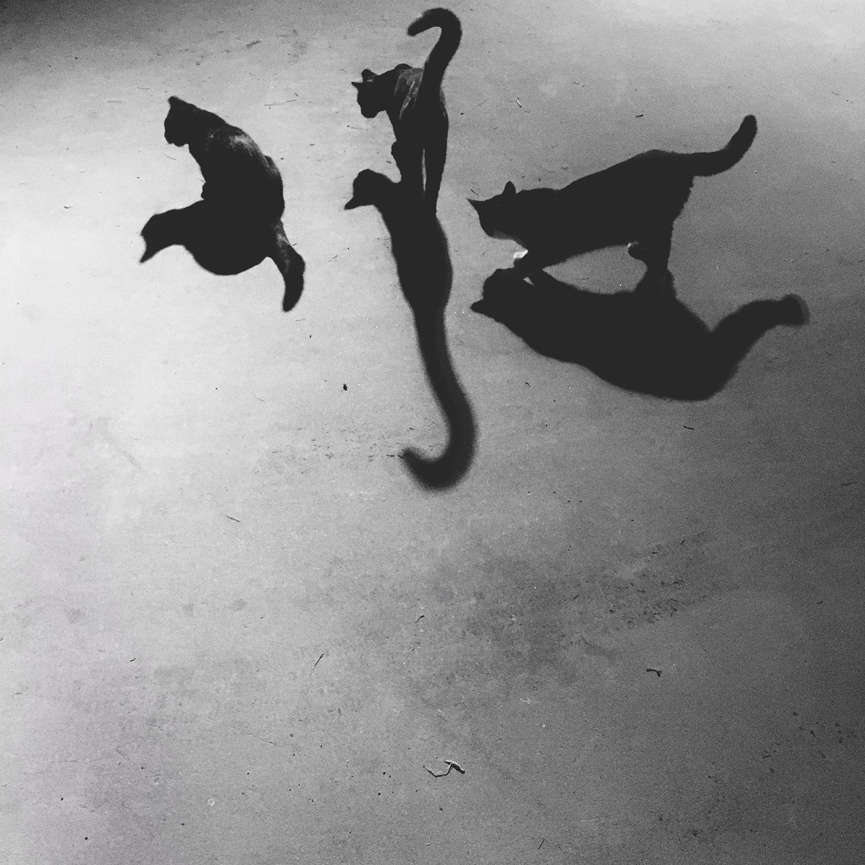 Night Trio ,  Krysia Lukkason