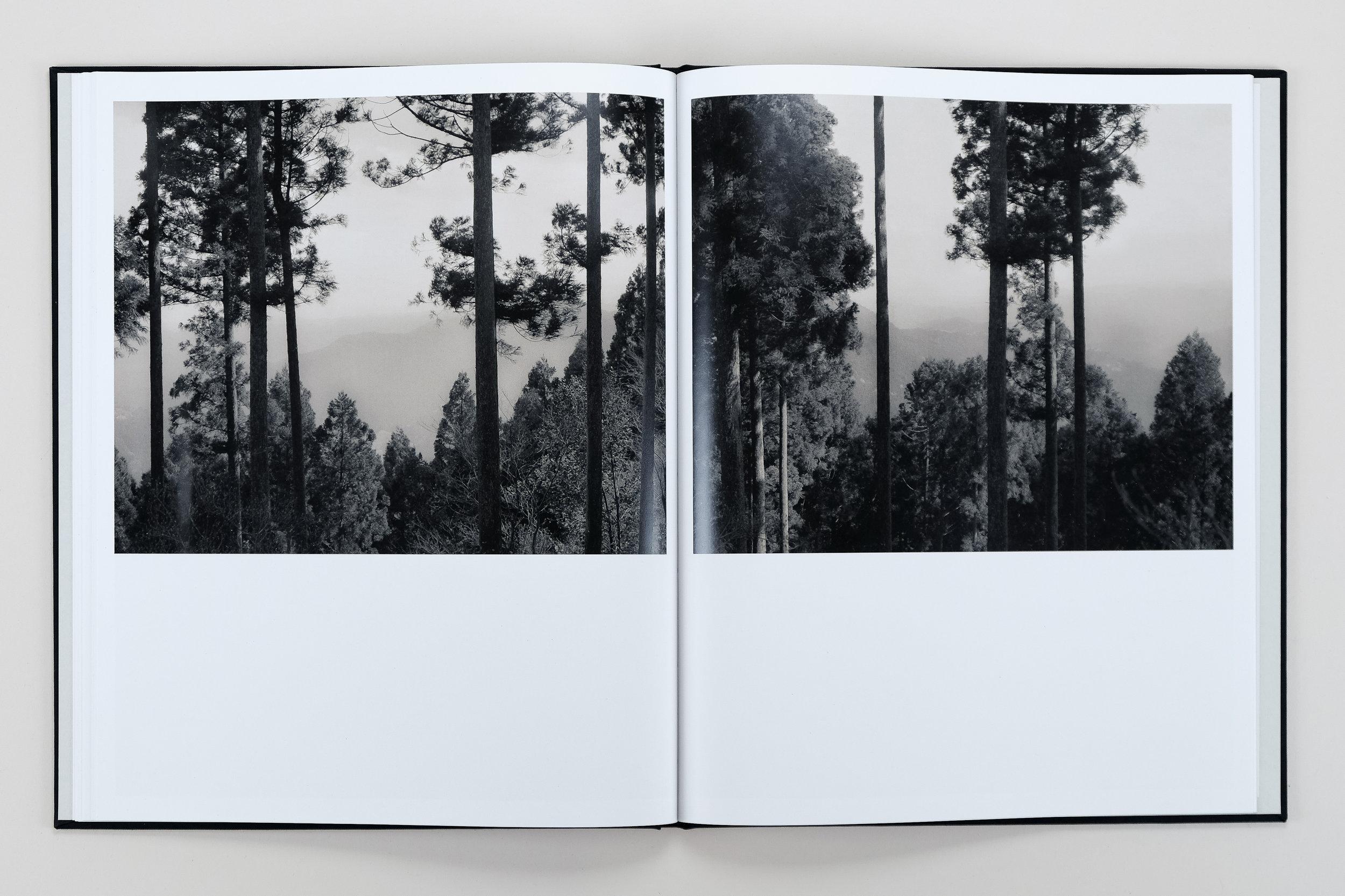 Yuka & the Forest by Lena C. Emery