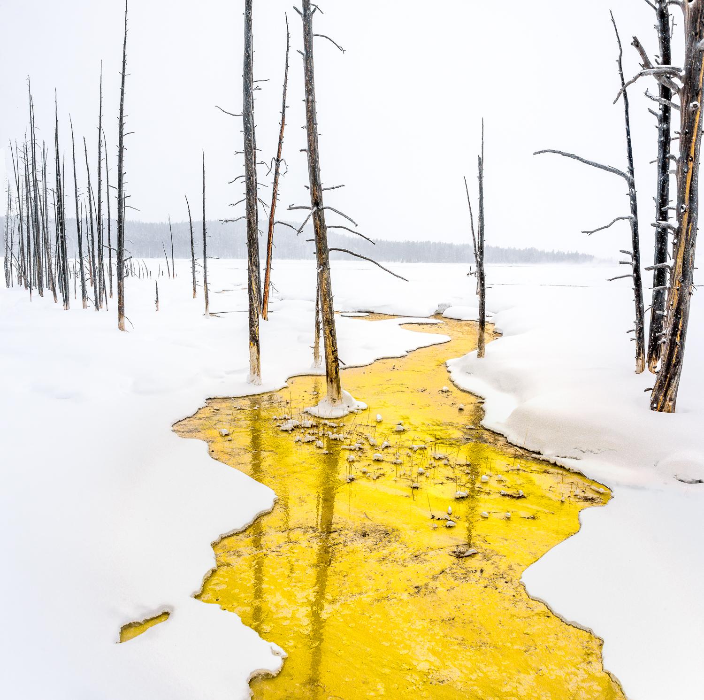 Yellowstone Winter #2 ,  Steve Burkett