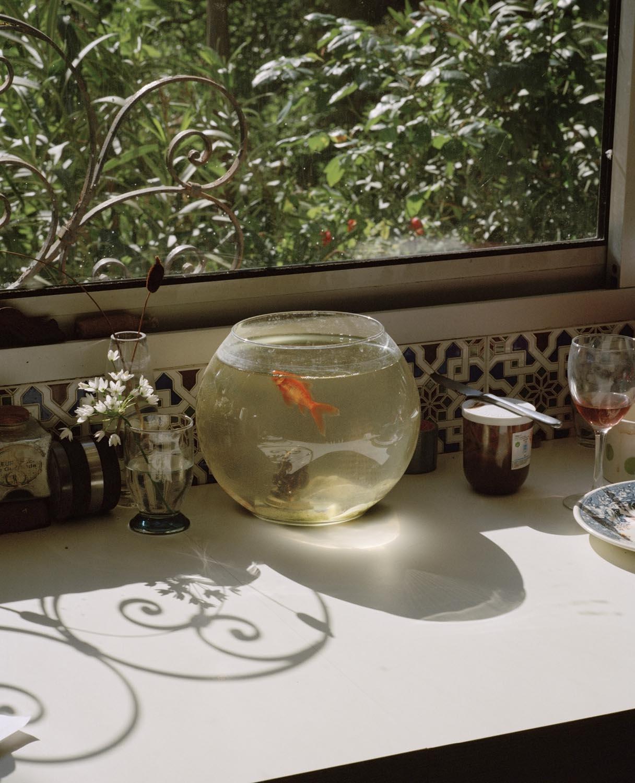 Goldfish, Tourette-Levens 2014 ,  Eva Vermandel