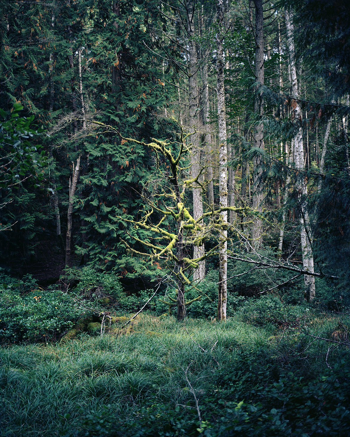 Untitled  from the series  Voices in the Wilderness ,  Ryan Walker