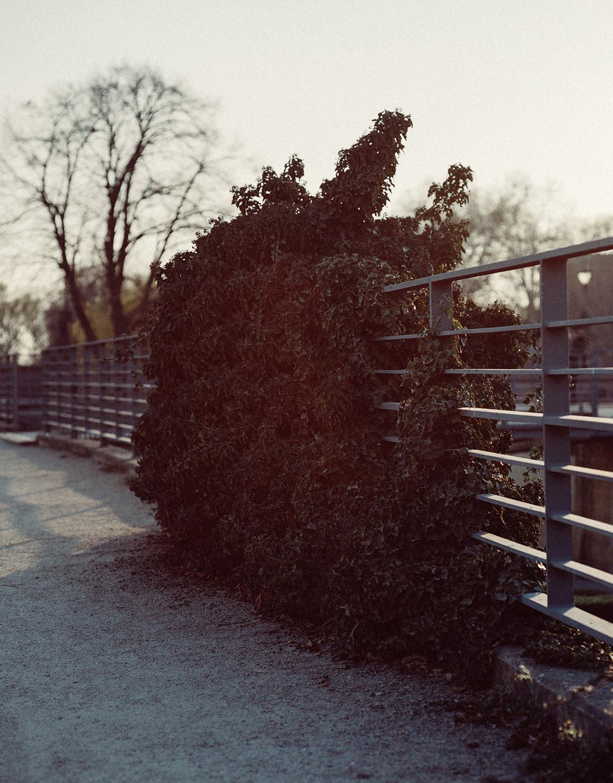 Overgrowth ,  Mackenzie Walker