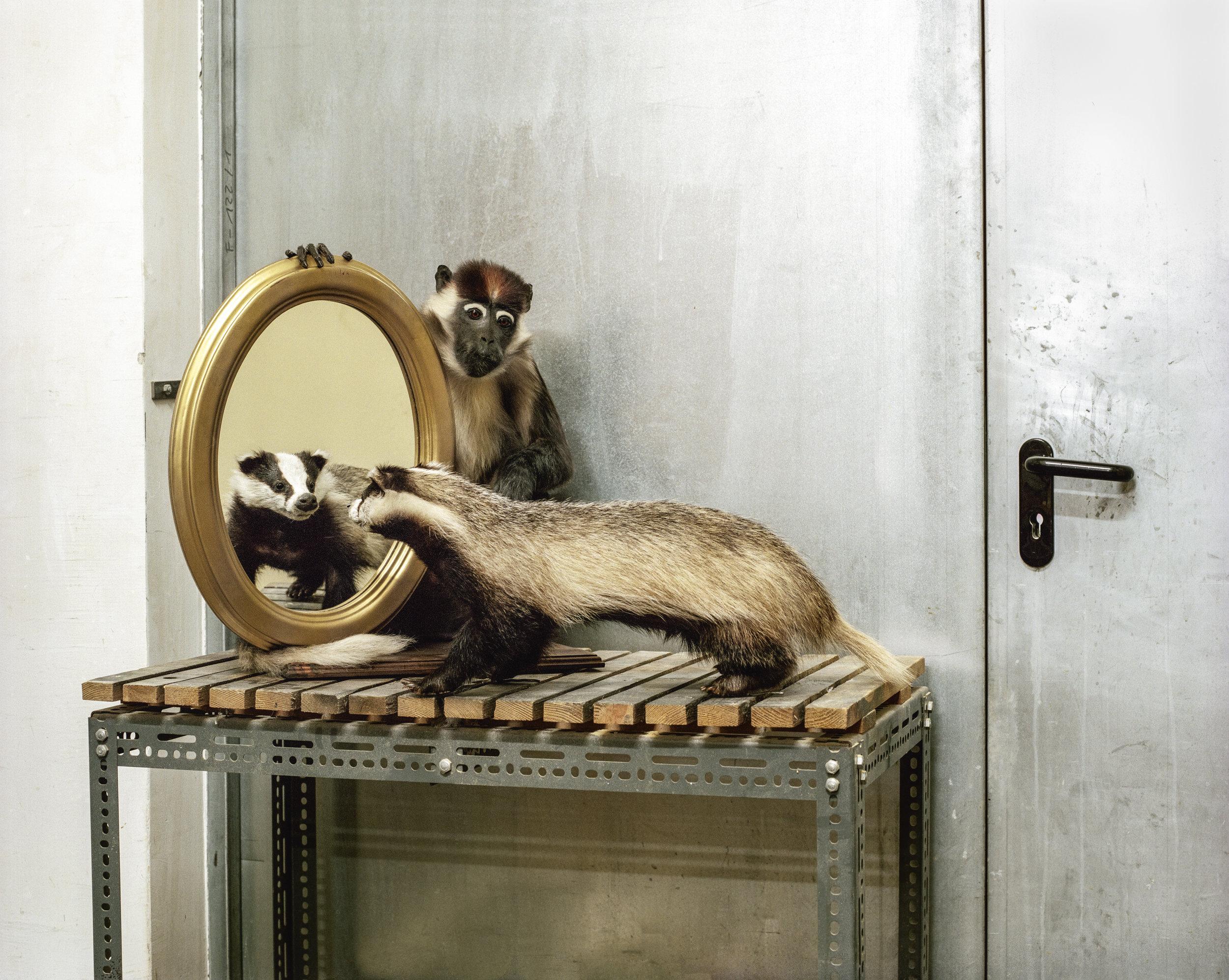 Pichler_Badger and Monkey.jpg