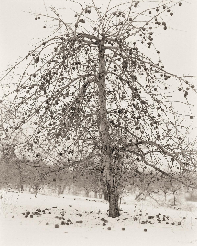 Fruitless Nº 1, 2005 ,  Tanya Marcuse