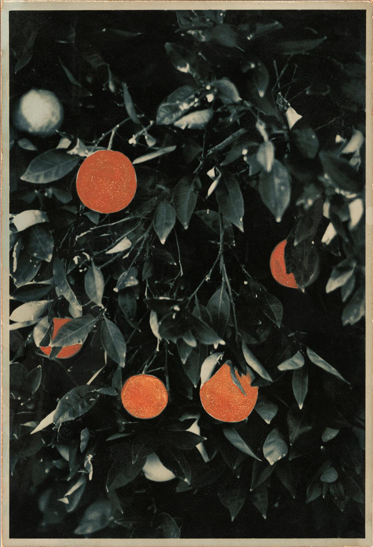 Oranges ,  Ernesto Esquer