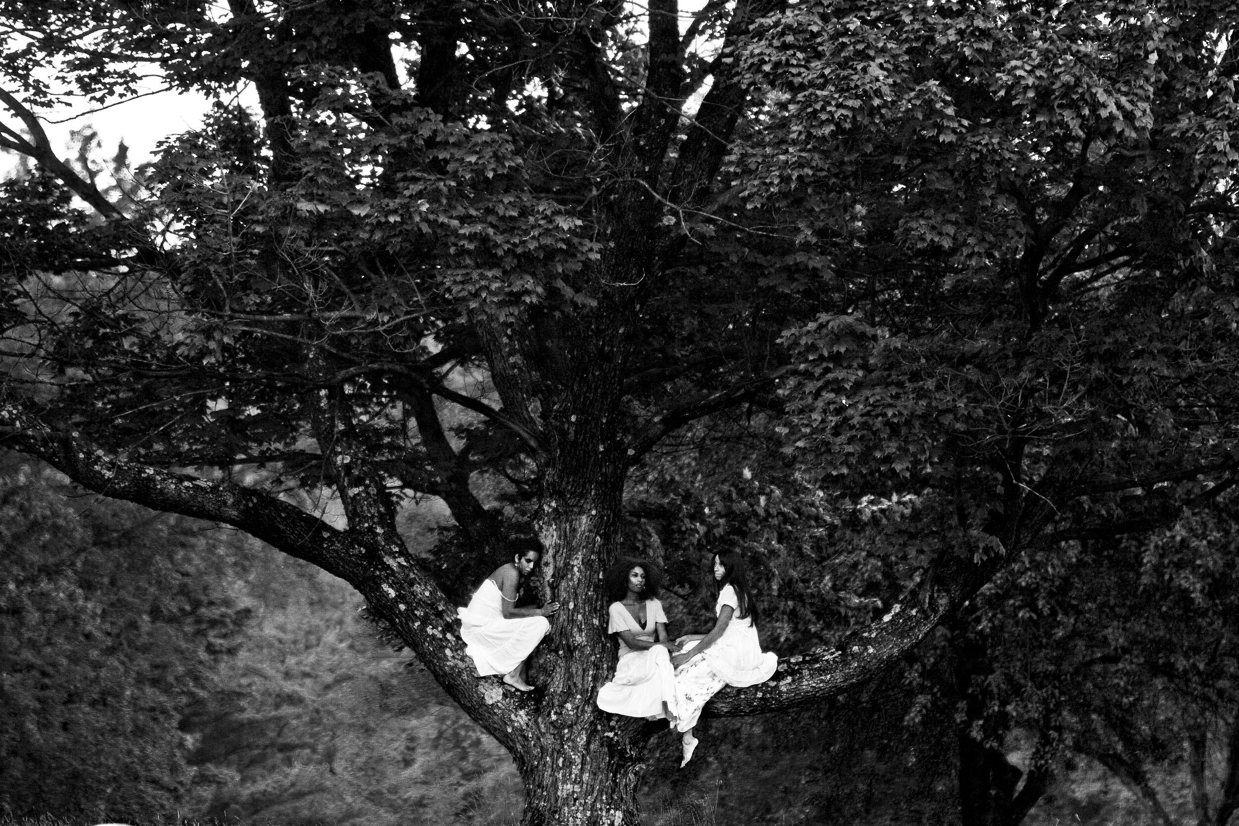 Women & The Tree (2008) ,  Rachel Eliza Griffiths