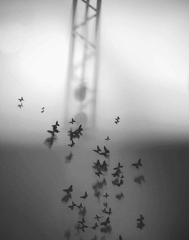 The Butterflies of Memory ,  Sonia Melnikova-Raich