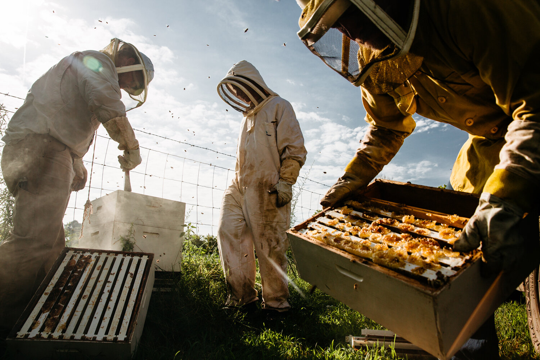 Ozarks Beekeepers ,  Terra Fondriest