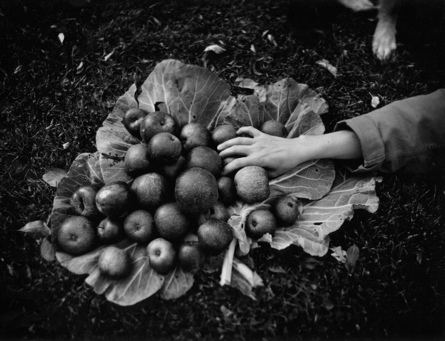 Hand and Apples ,  Jamie Tuttle