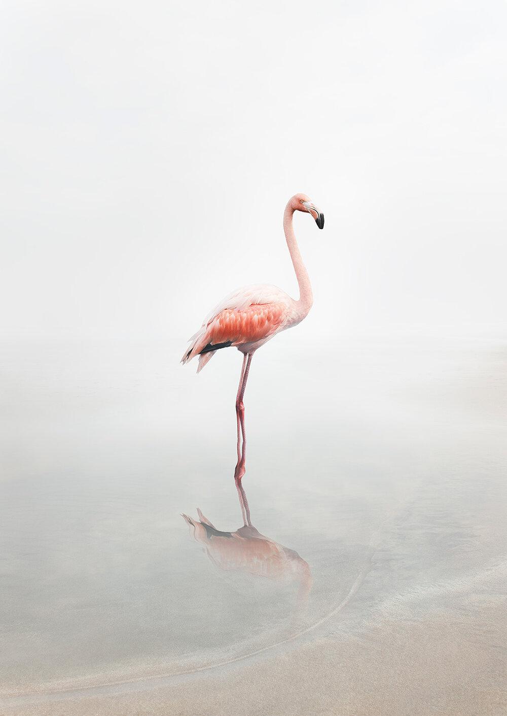 For Now Flamingo ,  Alice Zilberberg