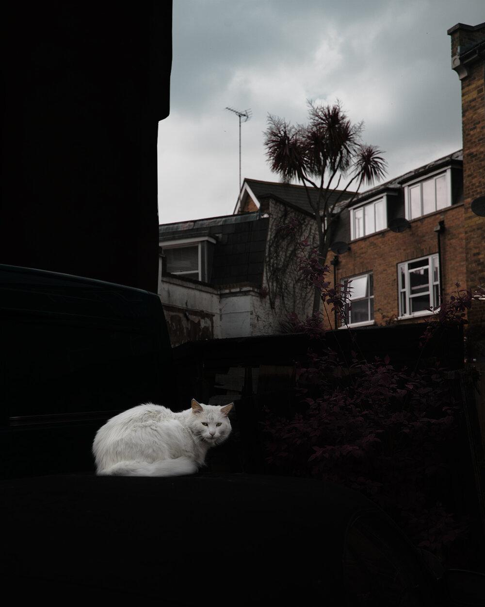 Shoreditch Alley ,  Daniel Bucci