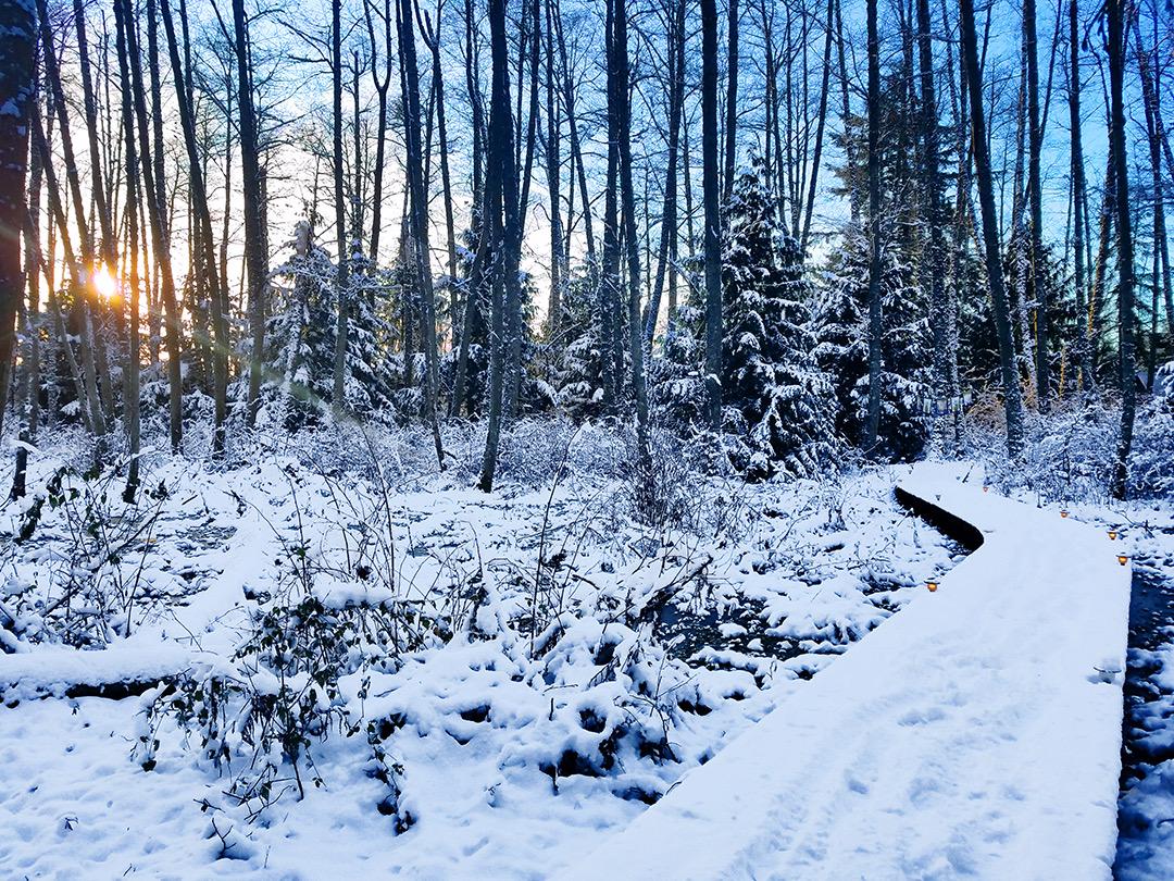 Winter Boardwalk 2.jpeg