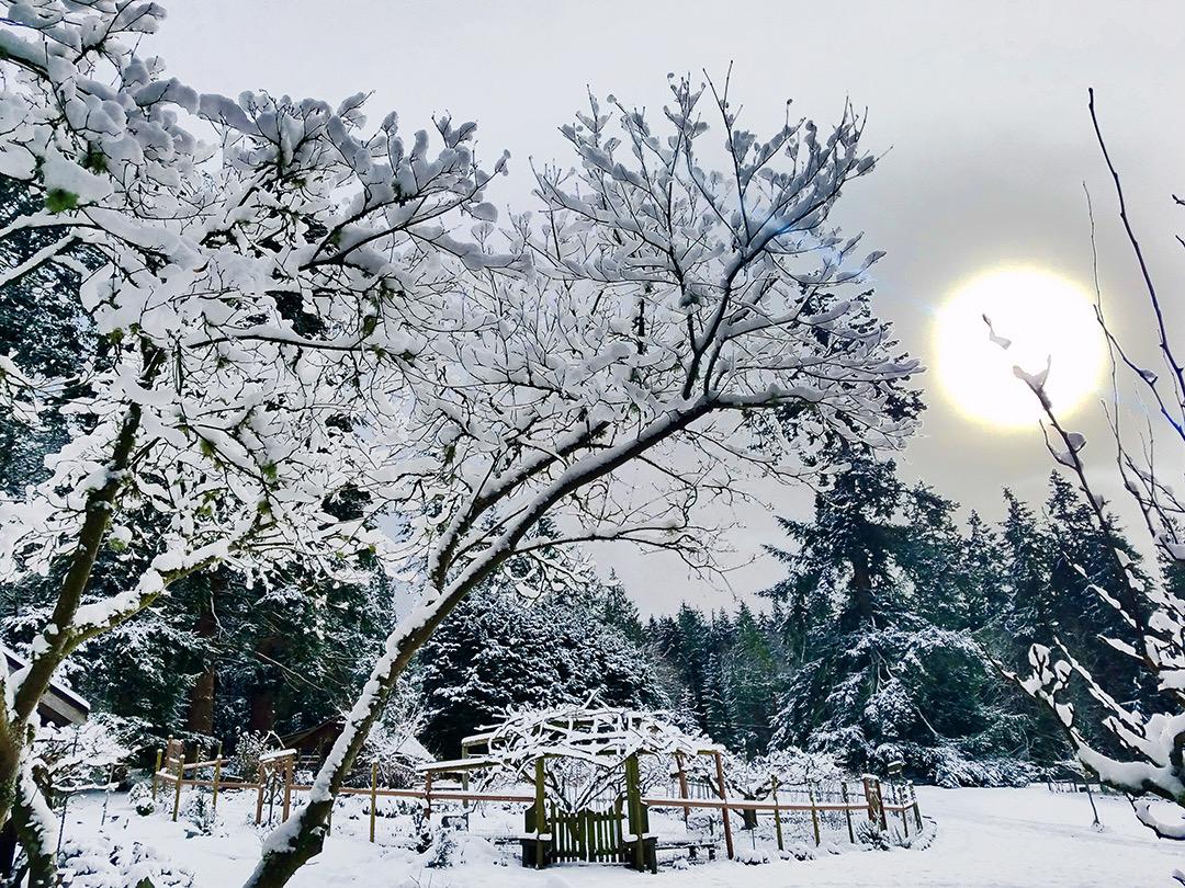 Winter Scene.jpeg