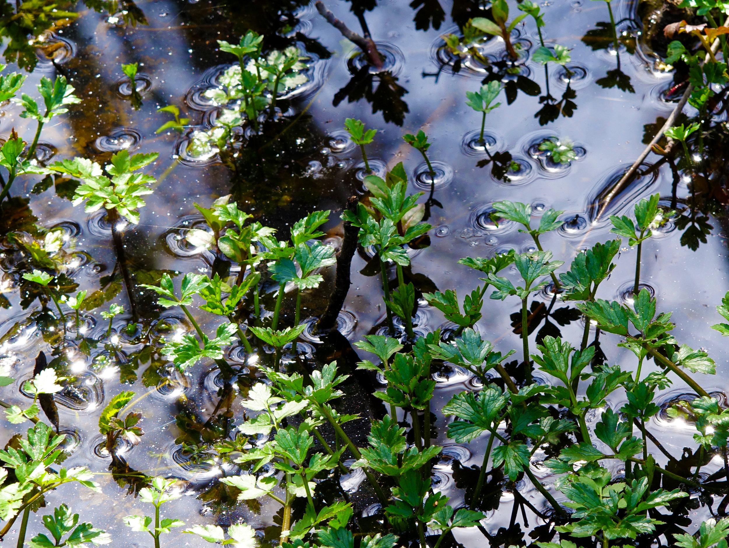 Spring Flowers 17.jpg
