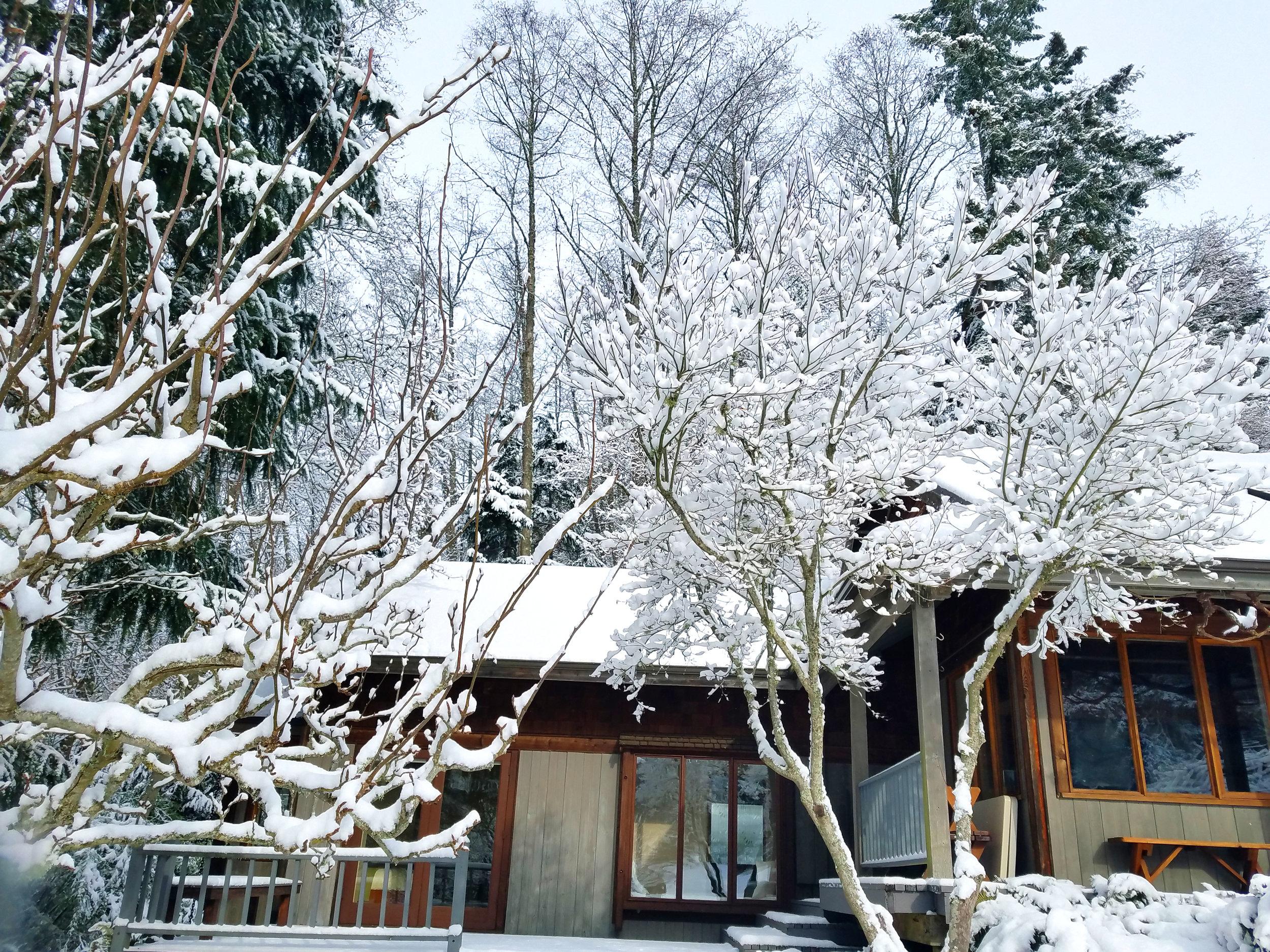 Winter Snow 15.jpg