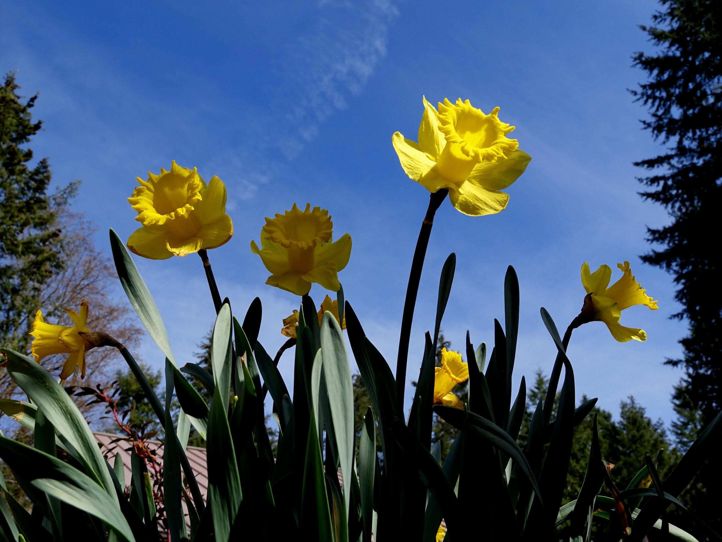 Spring Flowers 9.jpg