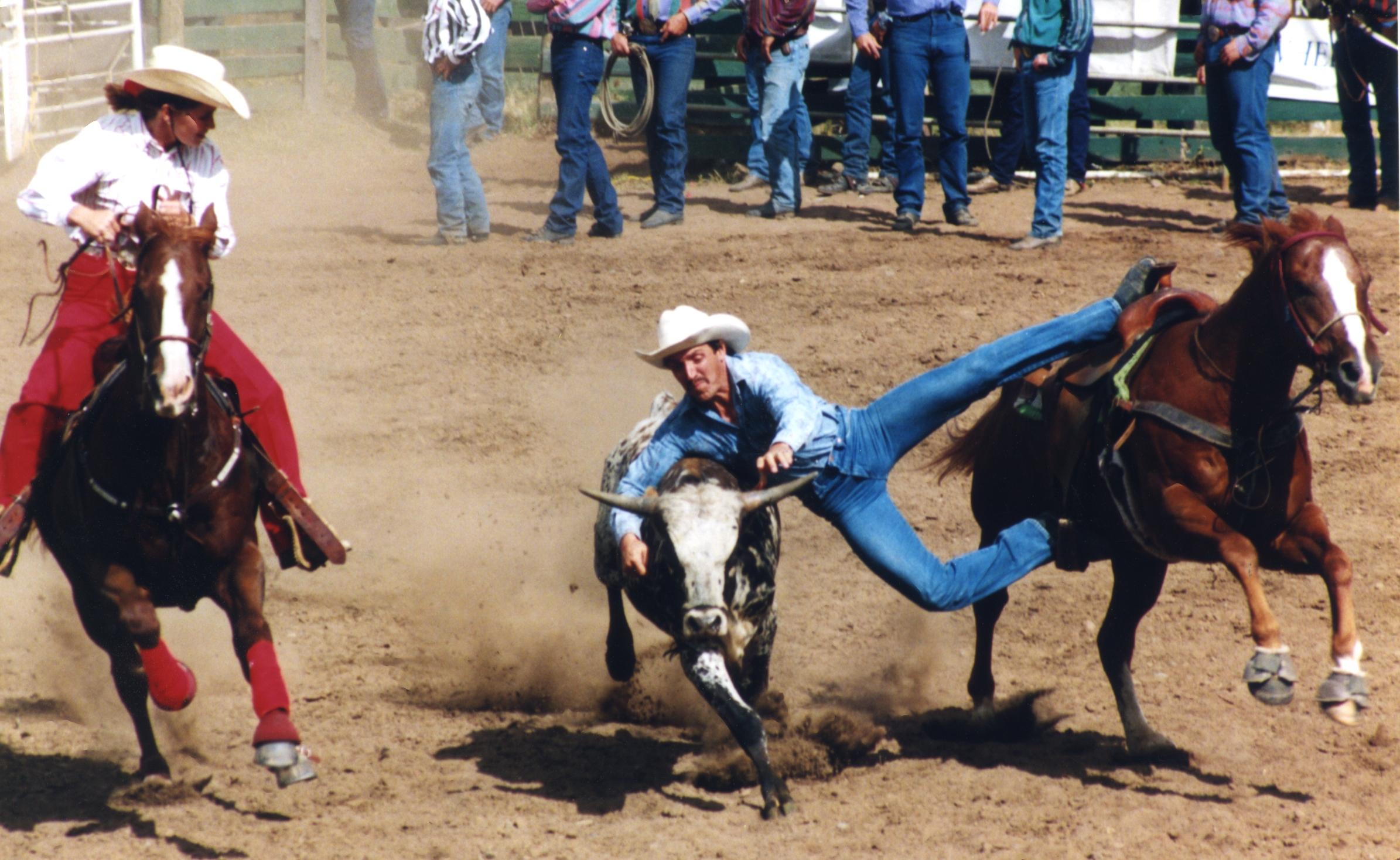 Steer Wrestling   Photo Credit: Photographic Options - Wendy Perry