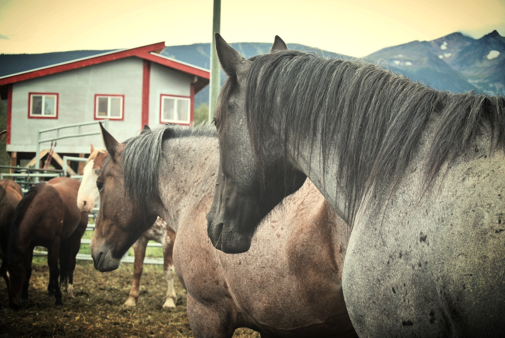 C+ Rodeos stock   Photo Credit: FOUR L FARM - SR McClary