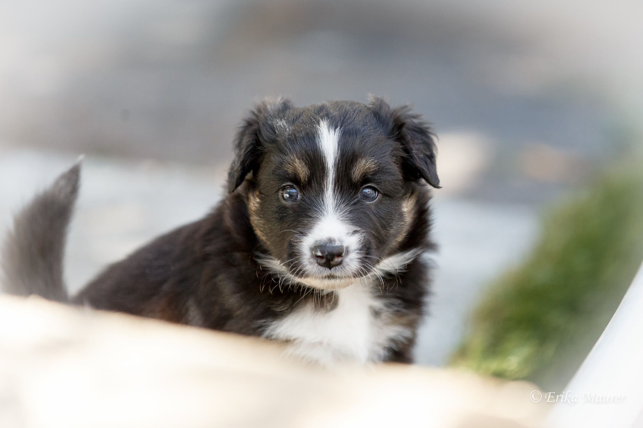 Pups10-26.jpg