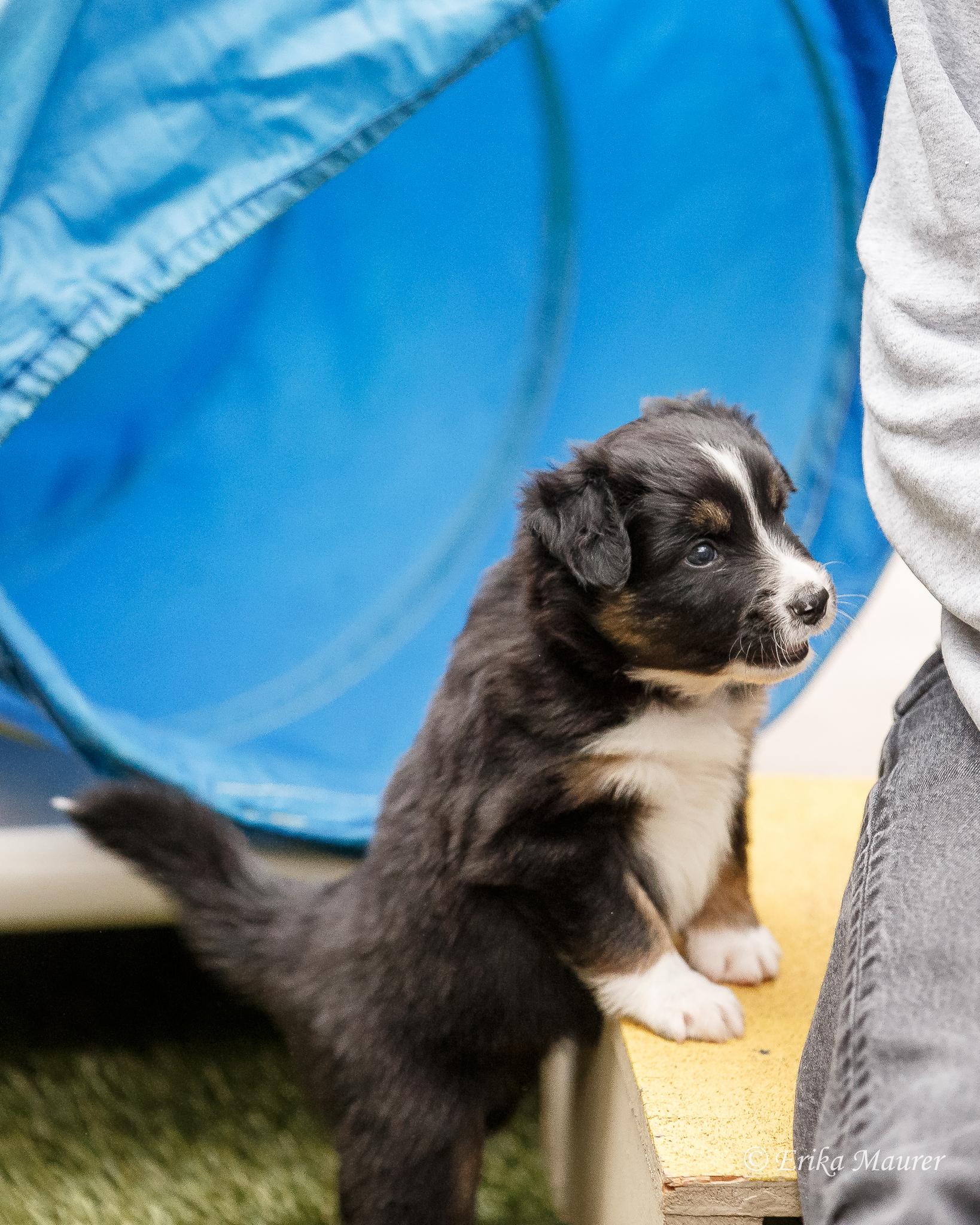 Pups10-27.jpg